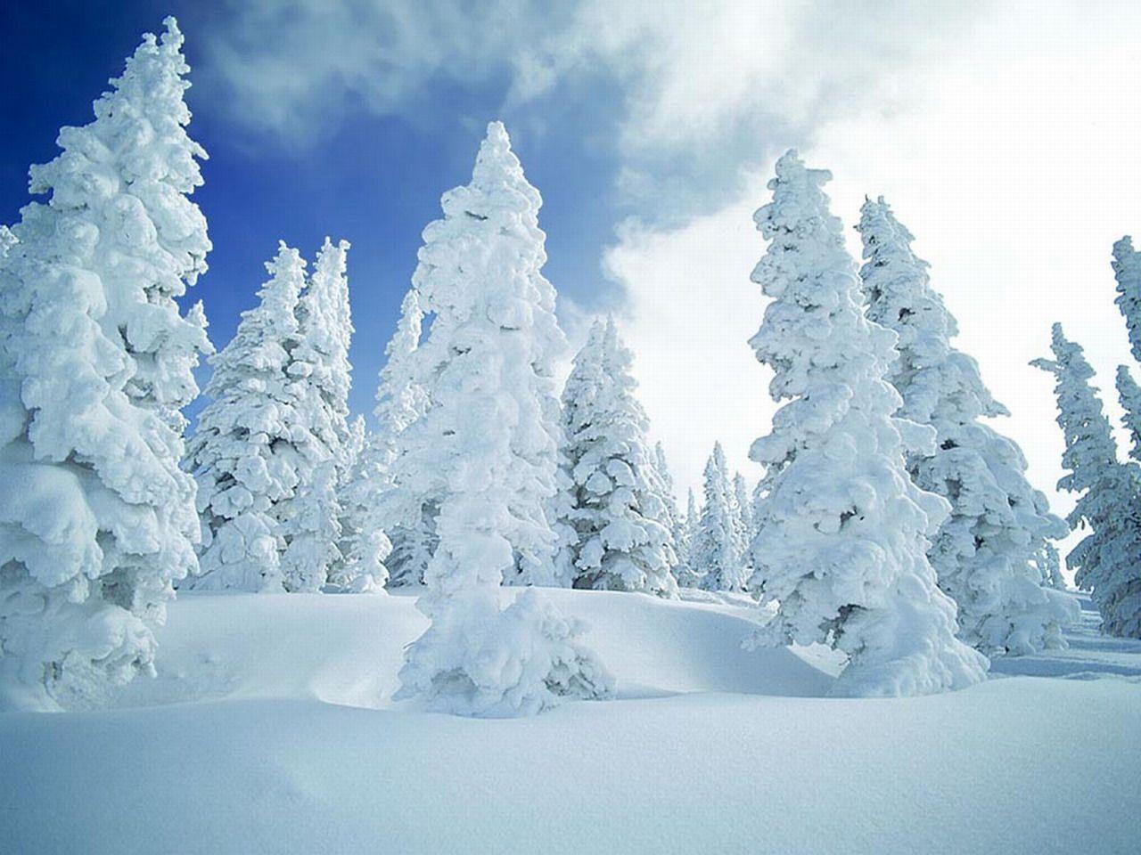 Fond D'écran De Paysages D'hiver Gratuit. fond d ecran hiver. 1280X960