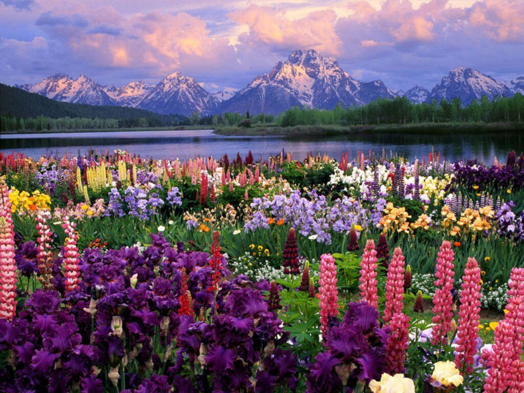 Voici quelques beaux paysages tous trouver sur le net