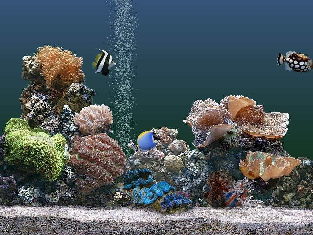 Scenery wallpaper fond d 39 ecran anim gratuit a telecharger for Fond ecran gratuit aquarium